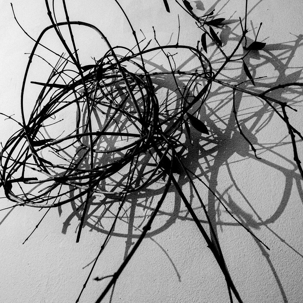 Zweige